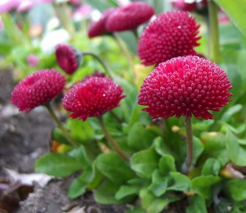 Flower Bunch by bebrox