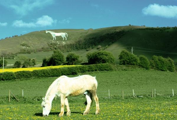 White Horse by BigBenn