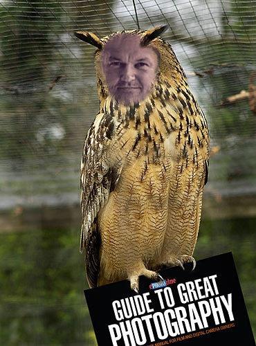 Fun Owlday by Boyd