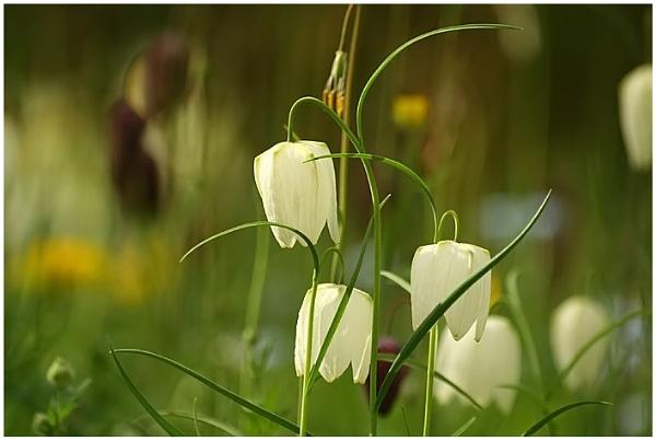 Springtime by naturenut