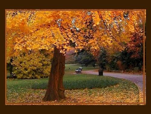 Autumn Scene by rania