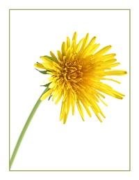 weedy yellow