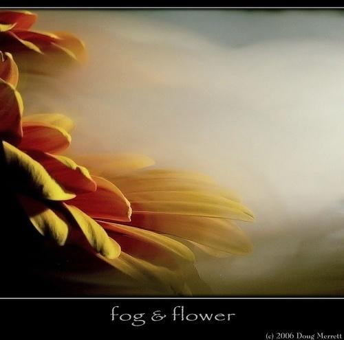 fog & flower by sputnki