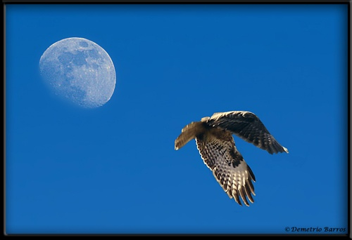 Into the blue by demetrio