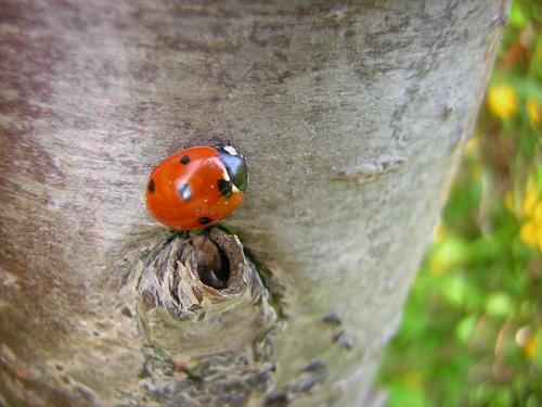 Awakening ladybird by Fran