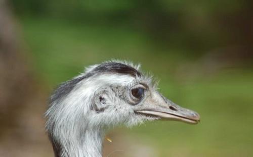 Emu by craignjulie