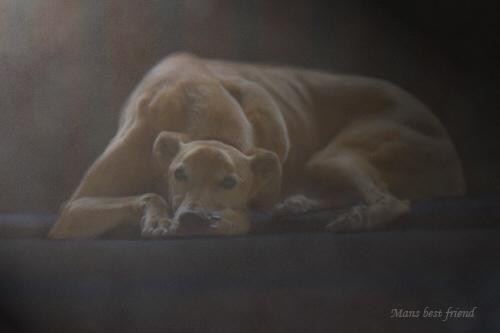 Greyhound by chinny
