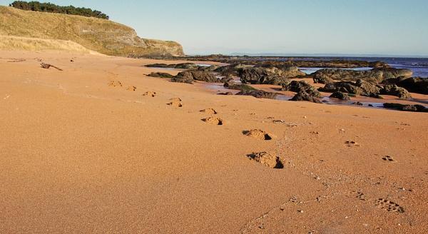 Footprints by motman