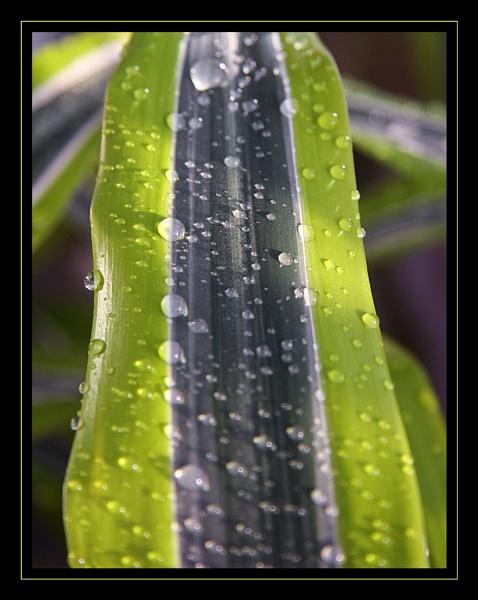 Raindrops 2 by mathugamble