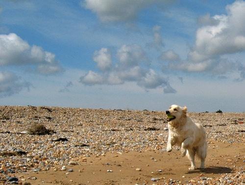 Beach Ball by marlin