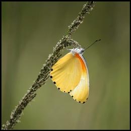 Flutterby #2