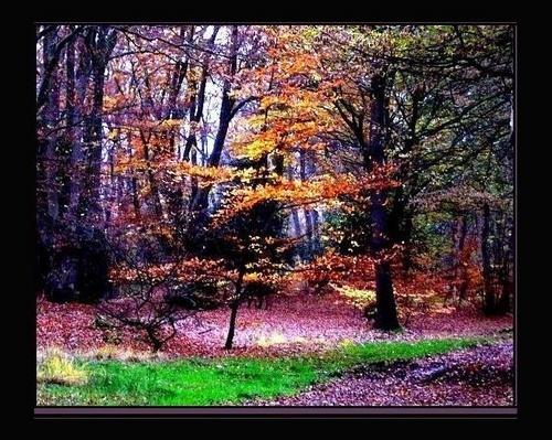 Autumn Sapling by rania