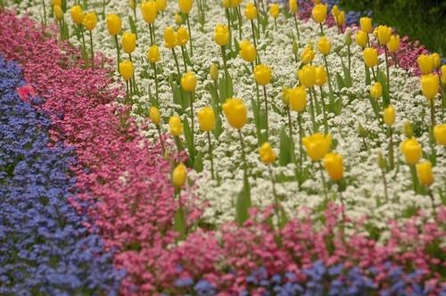 Spring Gardens by casey