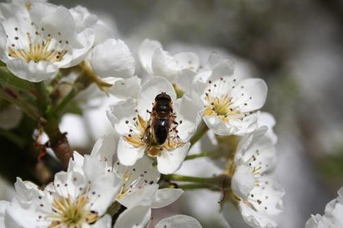 Spring Blossom by malc