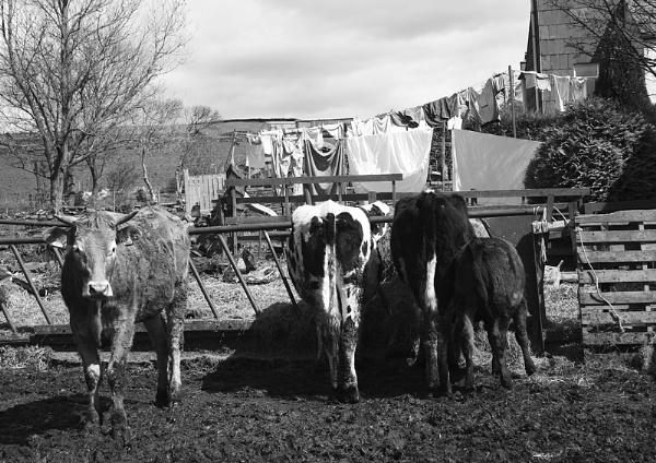 farm 4 by christabella