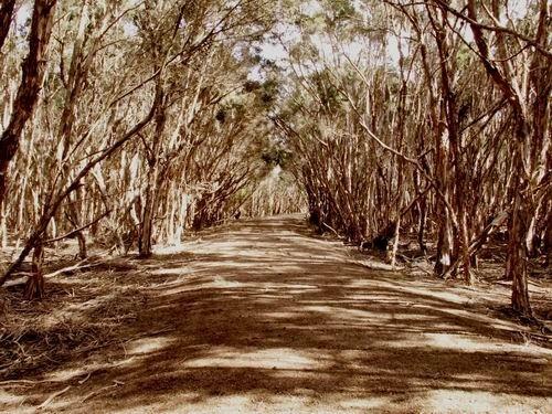 Lonely path .... by Nandana
