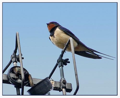 One swallow doesn\'t.. by Hawkgenes