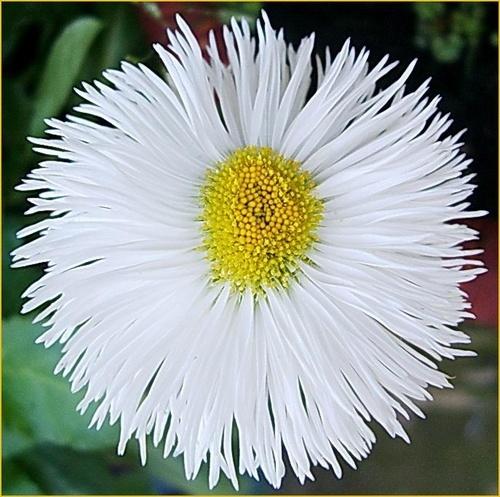 Funky flower by Emmaelle
