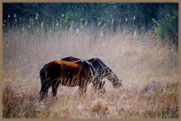 grazing by irenefosher