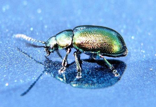 Glitterbug by Callanan