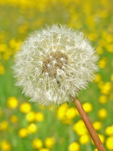 Seed pod by Ricardos