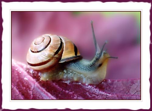 Snail by Sheenanigans