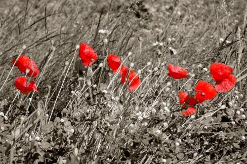 Flanders Fields by simmybear