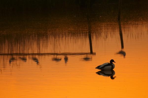 Waterhay sunset by strawman