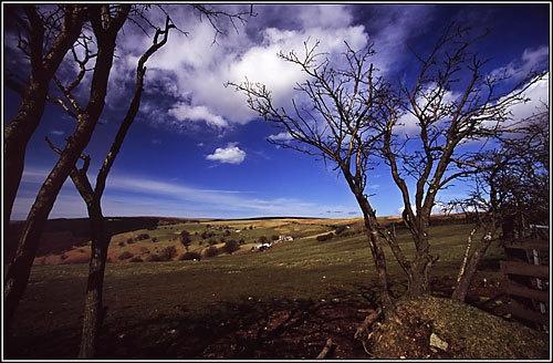 Joshua Tree by maljohns