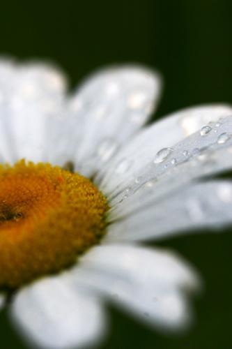 raindrops by sarah kruger