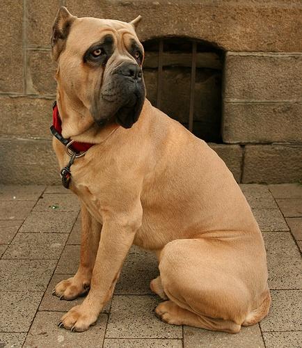 Big Huge Dog by conrad