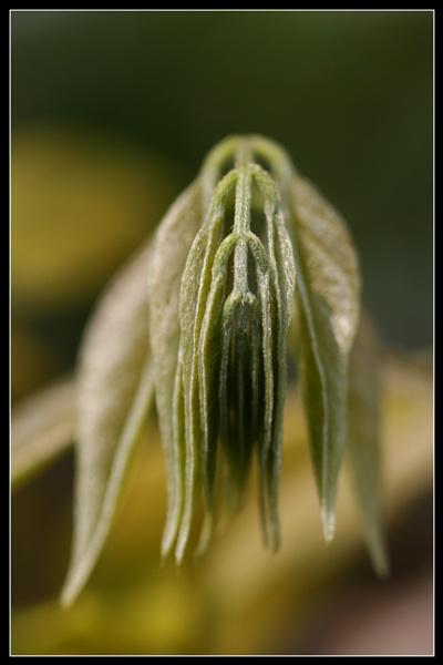 Leaf Monster by Morpyre