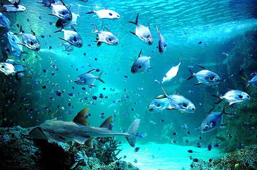Sydney aquarium by Taran