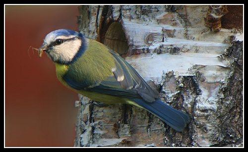 Nesting by AntonR