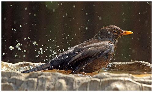 Bath Time by helengib