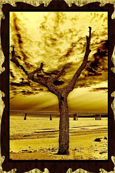 The Tree of Woe by ricochico