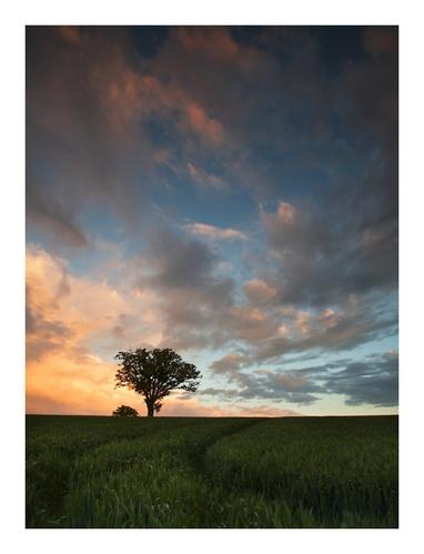 Tree by Chriscj