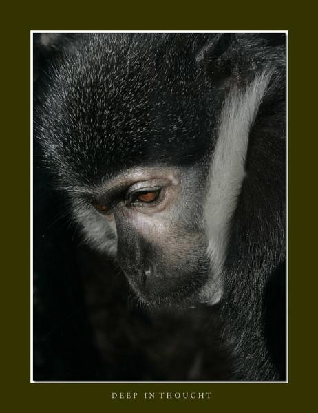 Cheeky Monkey by wwwCOLEUKcom