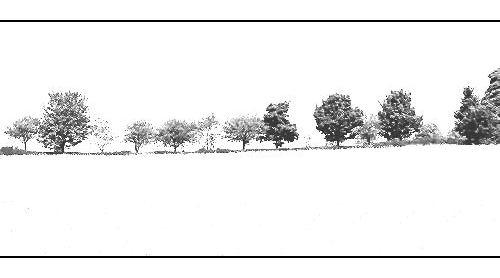 Treeline by CaroleA