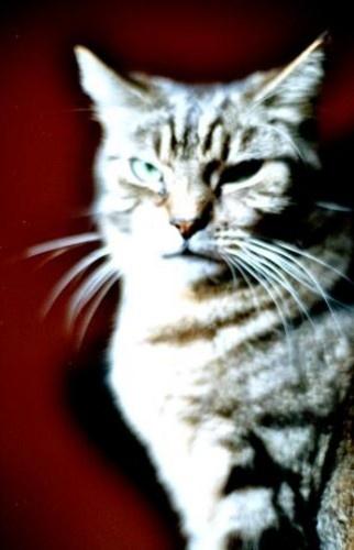 Phantom Feline by elmo
