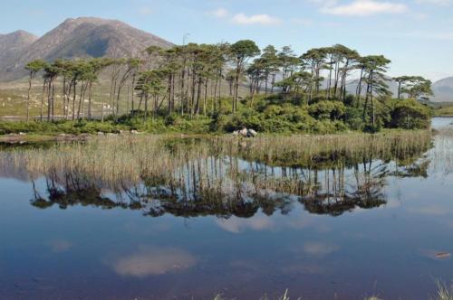 Connemara Morning by simmybear