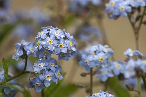 Little blue ones by RipleyExile