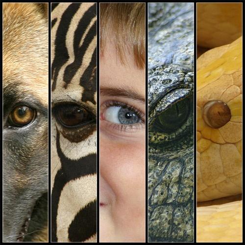 Eye 5 by zanzibarwinds