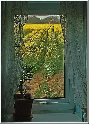 The Window by joan duckett