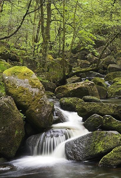 Padley Gorge, #2 by Sabreur