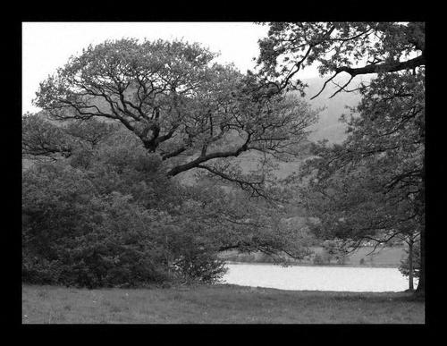 lake land b&w by hibby