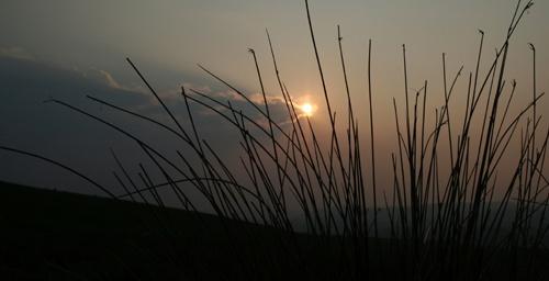 reed by Matthew_Leyshon