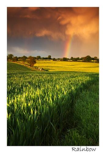 Rainbow by Chriscj