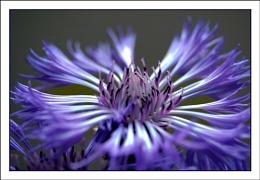 Soft Blue 2