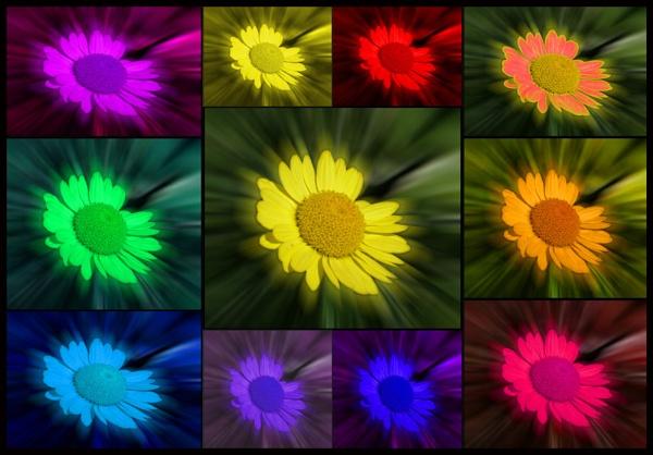 Flowers by motman